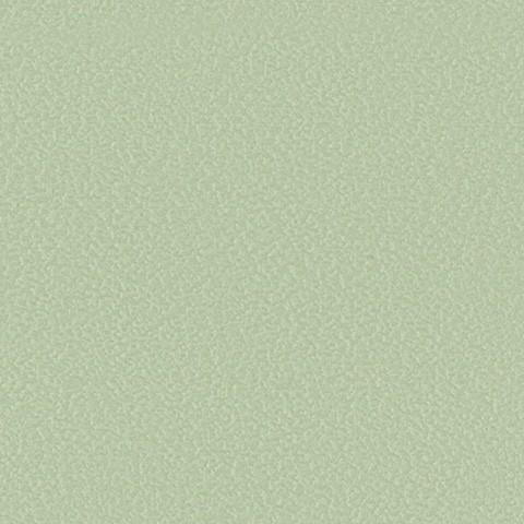 F4340-20291-lichen